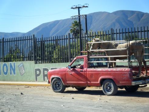 A Mexican Horse trailer